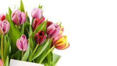 """Незабываемый подарк к 8 Марта  - поздравление с фотографией в газете """"Грани""""! С 8 марта"""