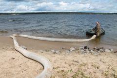 Выпуск мальков в Чебоксарское водохранилищеЧебоксарская и Жигулевская ГЭС выпустили в Волгу 12 тысяч мальков стерляди РусГидро