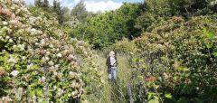 Ботанический сад. Фото Вероники Кочешковой.Прокатимся по Чувашии! Тропой туриста #выборГрани