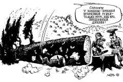 Леса под топор  Зона коррупции