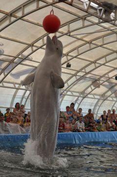 delf.jpgВ Чебоксары приехал плавучий дельфинарий