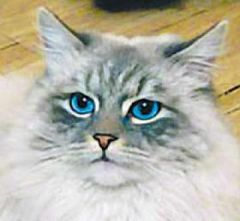 dorofiei.jpgПропажа кота Дмитрия Медведева оказалась обычной шуткой кот Дмитрий Медведев твиттер
