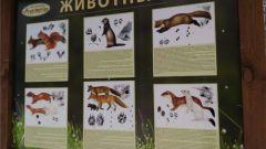 Ельниковской роще обустраивается экотропа