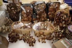 В Минсельхозе России состоялась I Всероссийская грибная конференция