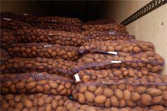 Чувашский картофель - на экспорт. Фото: cap.ruФермеры Чувашии продали 800 тонн нового урожая картофеля в зарубежные страны картофель