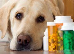 kotopes-schekino.jpgГде купить лекарство  для собаки? животные Аптека