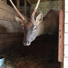 В Новочебоксарском зоопарке новый зверь, которому нужно имя
