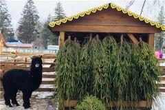 В Чебоксарах объявили о сборе елок для животных