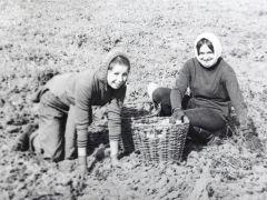 Студенты на картошке. Фото из личного альбома Н.Глотовой (слева)Чем мне запомнилось студенчество? День студента