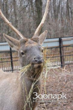 Дай имя оленю  и ходи в зоопарк бесплатно Ельниковская роща 2017 - Год Ельниковской рощи