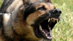 Больно и страшно бродячие собаки бездомные собаки