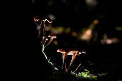 Фото: Константин Чалабов / РИА НовостиАномальная зима принесла грибы в российские леса Погода