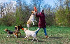Когда на Яблоневой массовый выгул собак, с маленькими детьми лучше обходить это место.Яблоневая уже не поляна, а пустырь! Яблоневая поляна Резонанс Ельниковская роща