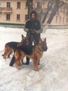 В Чебоксарах при пожаре погибла хозяйка мини-приюта для собак пожар ЧП Чебоксары приют для собак