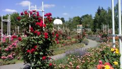 В пражском парке благоухают розы. Фото автора На родине бравого солдата Швейка. Продолжение Чехия Тропой туриста Прага