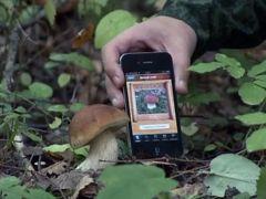 Какие приложения пригодятся грибникам и рыболовам МТС