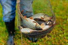На рыбалку с паспортом рыбалка