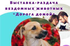 """10 октября в """"Амазонии"""" пройдет выставка-раздача бездомных животных"""