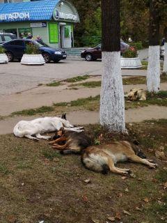 """На """"Каблучке"""" собаки отдыхают.  Фото автораИ страшно, и жалко бродячие собаки"""
