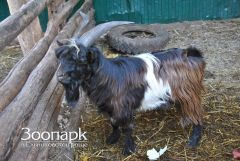 В зоопарке Ельниковской рощи пополнение Ельниковская роща 2017 - Год Ельниковской рощи
