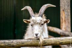 В Новочебоксарском зоопаркеКруг друзей и меценатов Новочебоксарского зоопарка расширяется