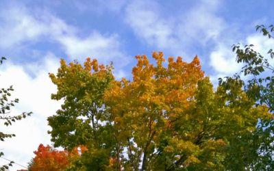 Разгулялась осень... осень .красота...и многое другое
