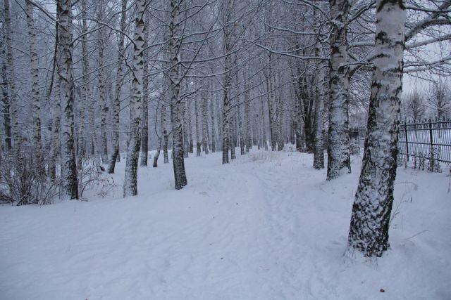 Sniezhnyi NChK 29 20